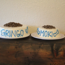 Dog friendly cakes for Gringo and Moki's 8th birthday!