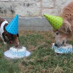Moki and Gringo with their birthday cakes!